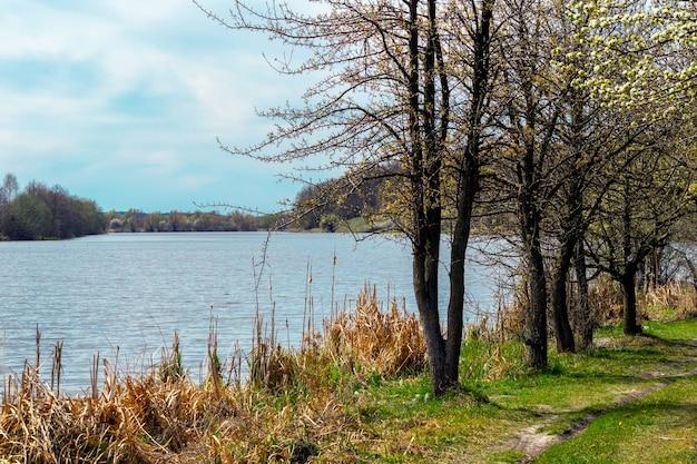 海岸に川と木々と春の風景
