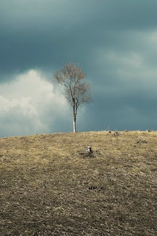 Spring landscape with a view of dead tree on a hill