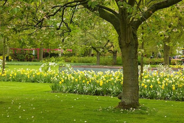 オランダ、キューケンホフ公園のダッチガーデンの春の芝生