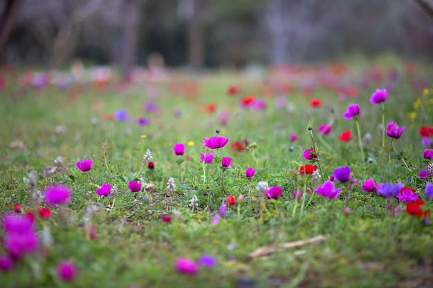 여러 가지 빛깔의 꽃이 자라는 봄 잔디