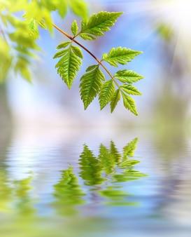 Весенние листья. композиция природы.