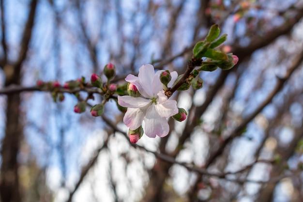 春の葉と花が咲くをクローズアップ