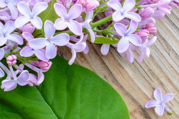 소박한 배경 장식 테두리 복사 공간에 녹색 잎이 있는 봄 라일락 꽃은 평평하게 놓여 있습니다.
