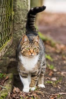 古いフェンスの近くの春3月のぶち猫。