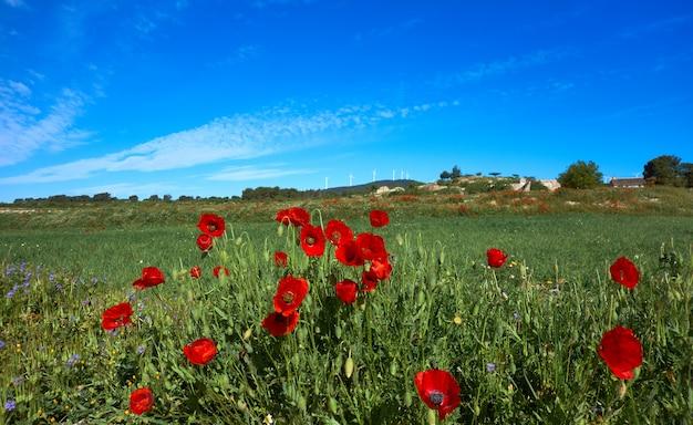 Spring meadow camino santiago levante
