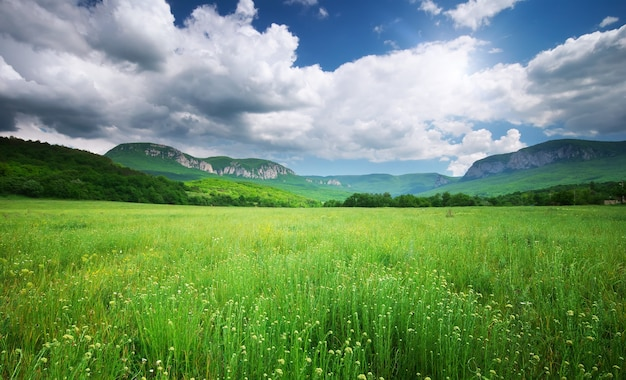봄 초원 풍경입니다. 자연의 구성.
