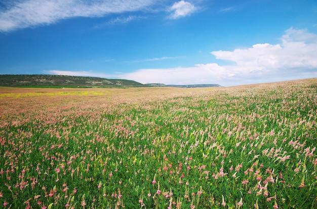 보라색 꽃의 봄 초원입니다. 자연 구성입니다.
