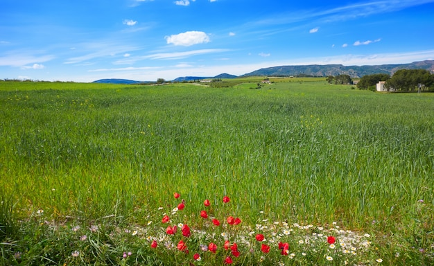 Spring meadows at camino de santiago