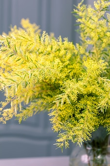 Spring mimosa flowers. concept of spring season.