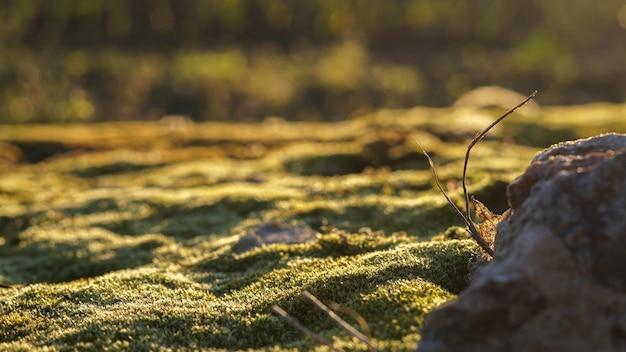 春の朝、苔の芝生は暖かい日差しにあふれています