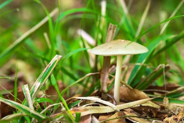 Весенний гриб в лесу