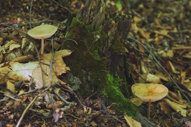 숲에서 봄 버섯