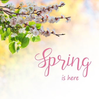 Spring nature background with apricot flowers on branch and hand lettering text spring in here