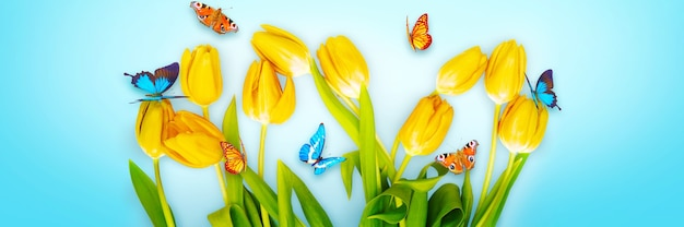 Spring nature background with beautiful tulips and butterflies