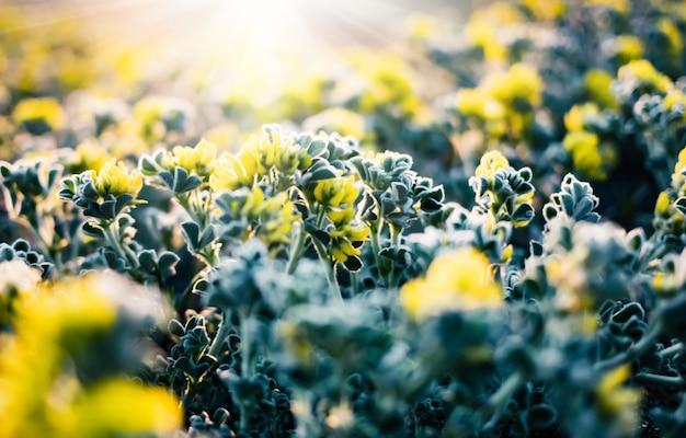晴れた日に緑の草や花と春の自然の背景