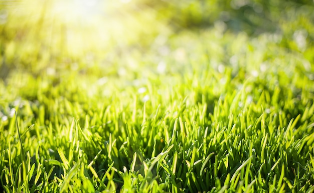Spring nature background with green grass