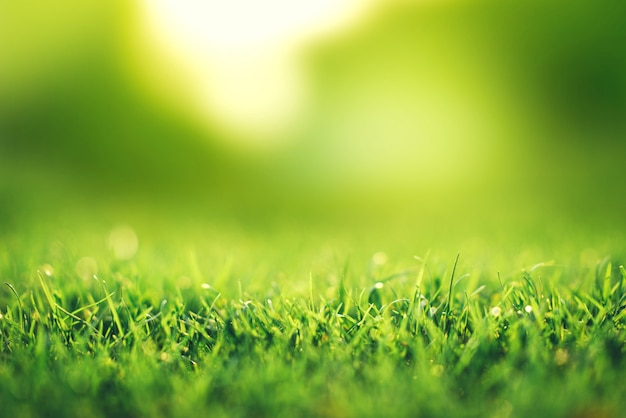 Spring and nature concept, closeup green grass field with blurred park and sunlight.