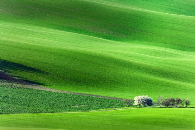 緑の波状のなだらかな丘の上に開花する花の咲く木々と春の自然の風景