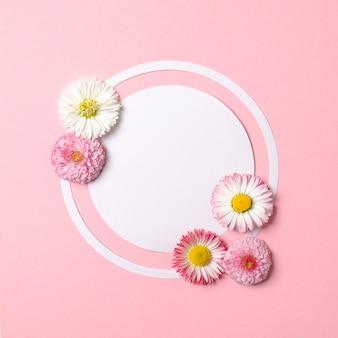Весенняя природа минимальная концепция. цветы ромашки и белая круглая бумажная карточка на пастельном розовом фоне.