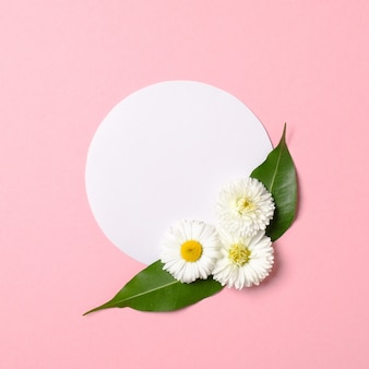 Spring nature minimal concept. daisy flowers with green leaves and white circle-shaped paper card on pastel pink background