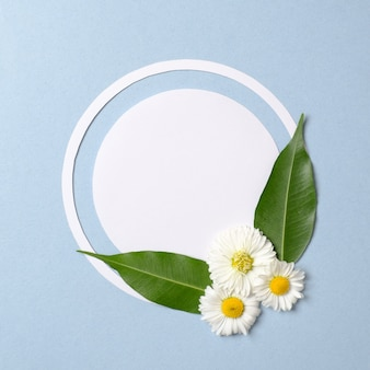 Spring nature minimal concept. daisy flowers with green leaves and white circle-shaped paper