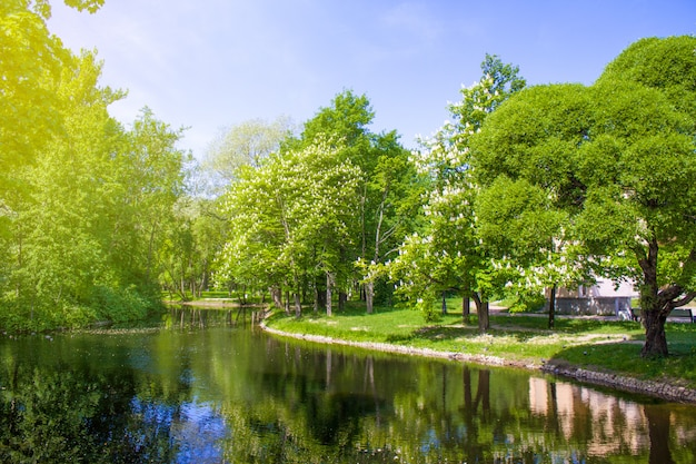 春の自然の風景。美しい風景。咲く栗の木、緑の芝生、川の土手と花の公園。