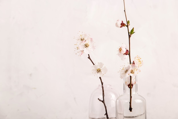 Spring neutral light minimalistic background with white flowers on the branches with copyspace