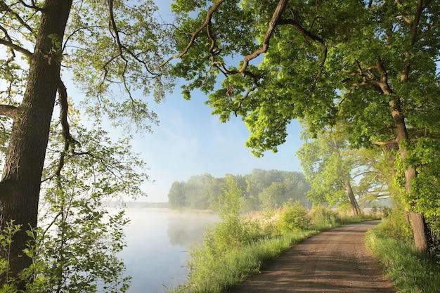 떠오르는 태양으로 강조된 호숫가의 봄 참나무