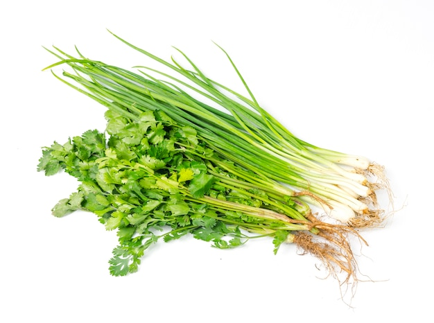 Spring onion and coriander isolated on white