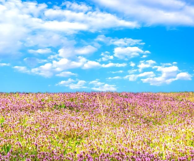Весной или летом природа фон с полем цветов и голубое небо с белыми облаками