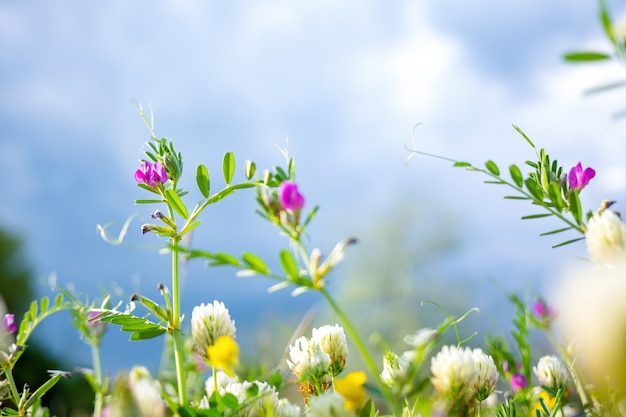 緑の草、野花、ボケと春または夏の自然の背景