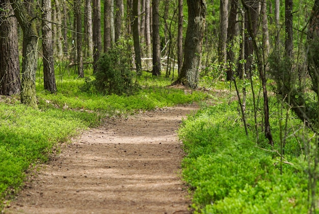 Весенняя тропа в сосновом лесу, весеннее пробуждение, солнечный день для прогулки, велосипед
