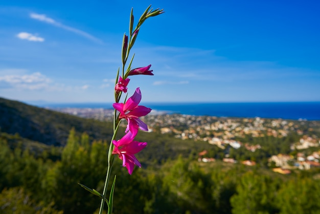 Spring pink flowers in montgo with denia skyline