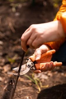木の枝や低木の春の剪定