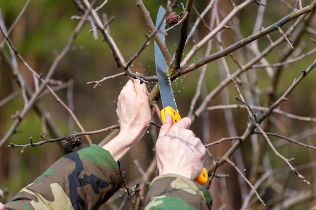 木の春の剪定。農夫は果樹園の世話をします