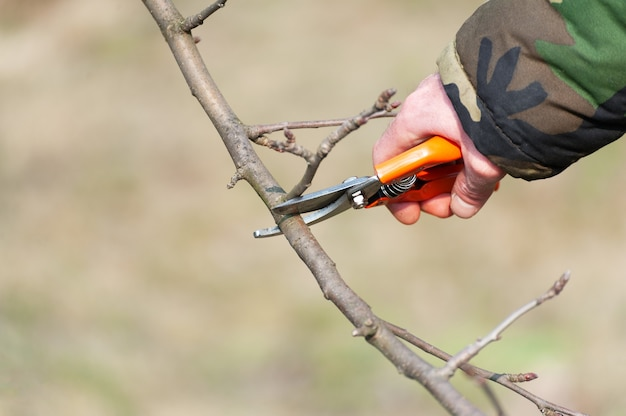 나무의 봄 가지 치기. 농부가 과수원을 돌본다