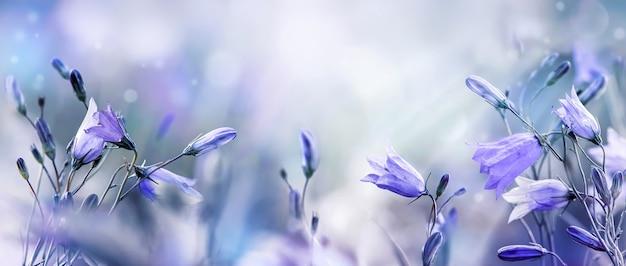 自然の背景に春紫の野生の花の鐘またはライラックの鐘の花。