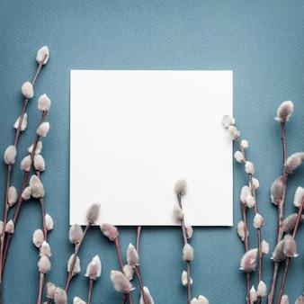 春の猫の柳の枝と青い背景の空白のカード。春のコンセプト