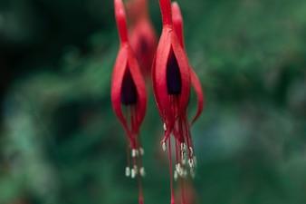 Spring red flower blooming in park