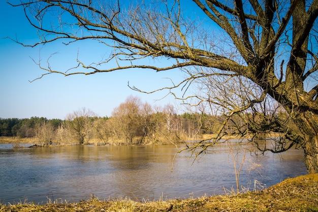 Весенний сельский пейзаж с безлистными деревьями и рекой под голубым небом.
