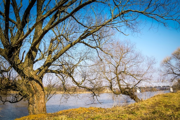 Spring rural landscape with leafless trees and river under blue sky.