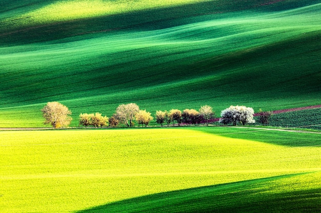 緑の波状のなだらかな丘の上に開花する花の咲く木々と春の田舎の自然の風景。素晴らしい夕日の夜の光。南モラヴィア、チェコ共和国。