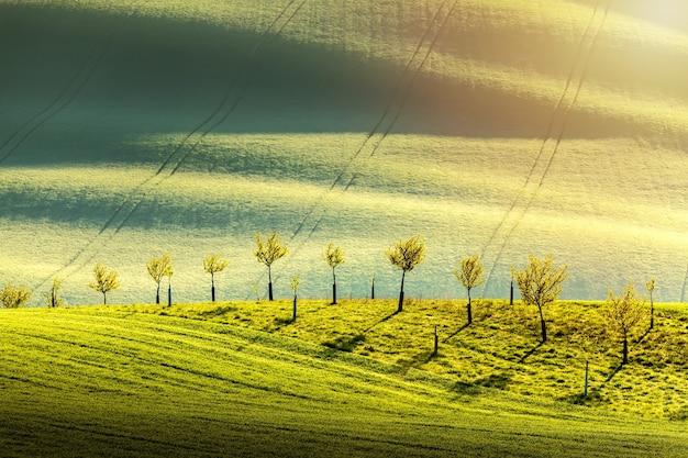 緑の波状のなだらかな丘の上に若い木がある春の田舎の自然の風景。素晴らしい夕日の夜の光。南モラヴィア、チェコ共和国。