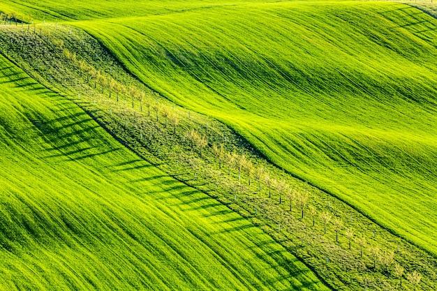 緑の波状のなだらかな丘の上に若い木がある春の田舎の自然の風景。南モラヴィア、チェコ共和国