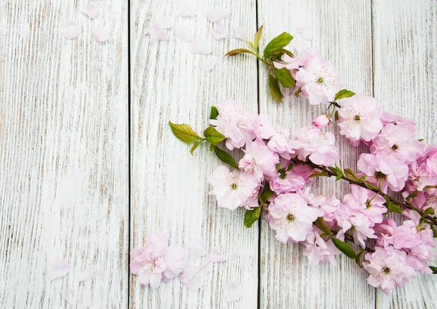 Spring sakura blossom background