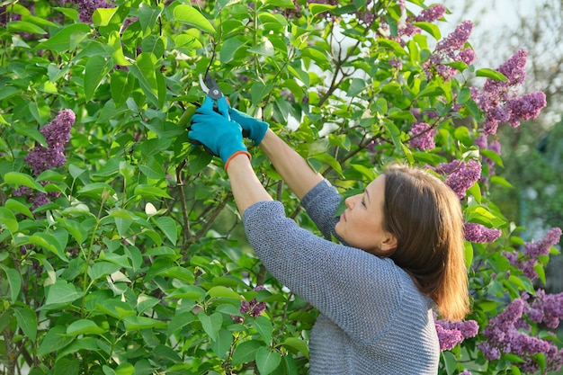 Spring season flowers, female gardener in gloves with secateurs cutting lilac branches