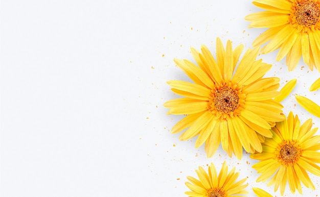봄 기간. 흰색 바탕에 노란 거 베라 꽃