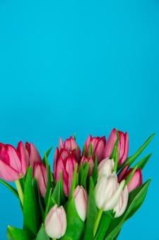 일반 배경에 봄 계절 꽃 튤립