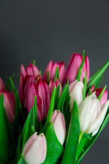 Весенние сезонные цветы тюльпаны на однотонном фоне