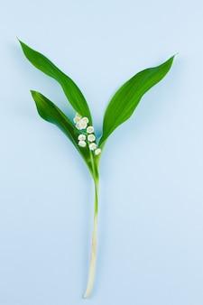 Весенние маленькие хрупкие лесные белые ландыши с зелеными листьями